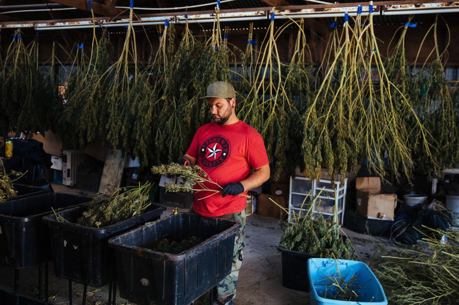Цены на марихуану где во вроцлаве купить марихуану